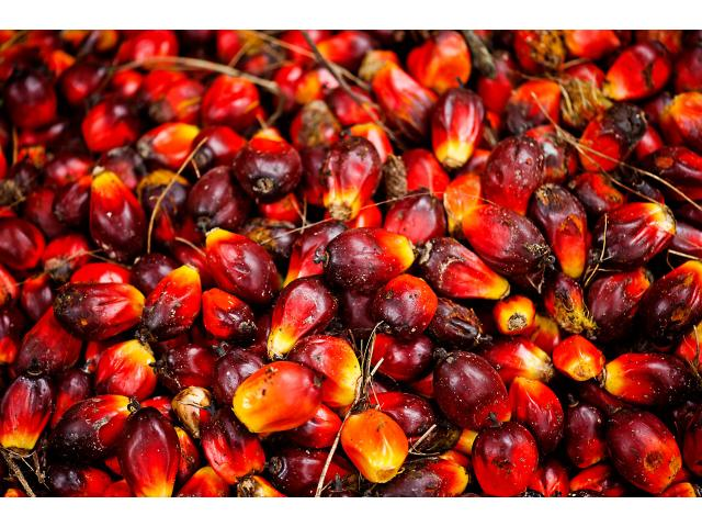 olio di palma raffinato e grezzo e olio di girasole.