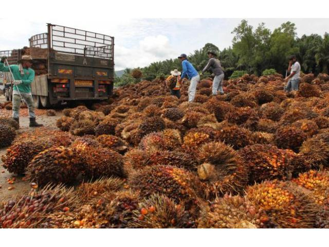 Olio di palma e olio di semi di girasole