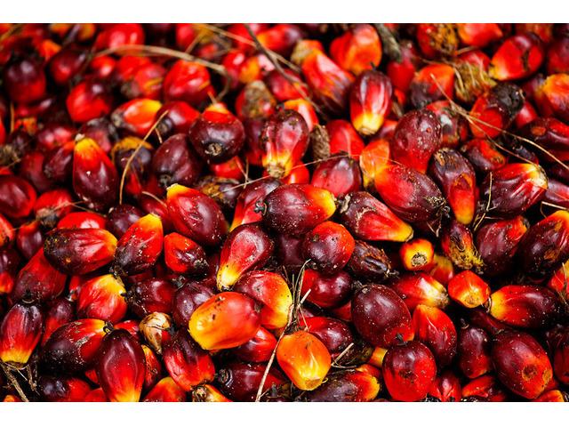 Olio di palma, olio di semi di girasole e altri