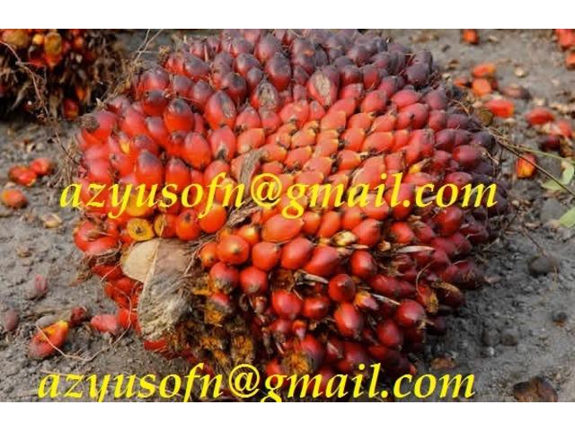 Olio di palma, olio di palmisti palma grezza e raffinata