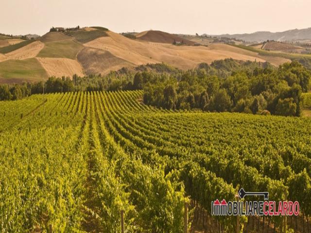 Montalcino, splendida azienda vitivinicola di brunello