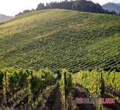 Azienda vitivinicola di brunello