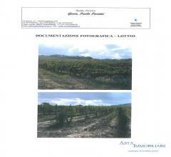 Terreno  agricolo - località montepetrini - san gimignano (si)